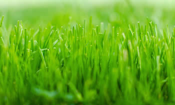 Lawn Service in Columbus OH Lawn Care in Columbus OH Lawn Mowing in Columbus OH Lawn Professionals in Columbus OH