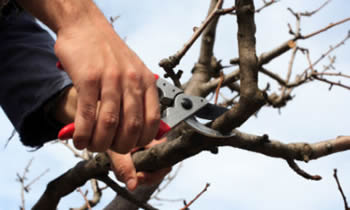 Tree Pruning in Columbus OH Tree Pruning Services in Columbus OH Quality Tree Pruning in Columbus OH
