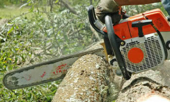 Tree Removal in Columbus OH Tree Removal Quotes in Columbus OH Tree Removal Estimates in Columbus OH Tree Removal Services in Columbus OH Tree Removal Professionals in Columbus OH Tree Services in Columbus OH