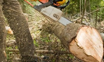 Tree Service in Columbus OH Tree Service Estimates in Columbus OH Tree Service Quotes in Columbus OH Tree Service Professionals in Columbus OH