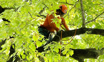 Tree Trimming in Columbus OH Tree Trimming Services in Columbus OH Tree Trimming Professionals in Columbus OH Tree Services in Columbus OH Tree Trimming Estimates in Columbus OH Tree Trimming Quotes in Columbus OH