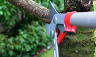 Tree Pruning Services in Columbus OH