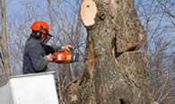 Tree Removal in Columbus OH